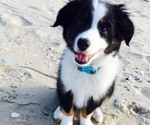 dog, adorable, and animal image
