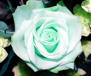 beautiful and roses image