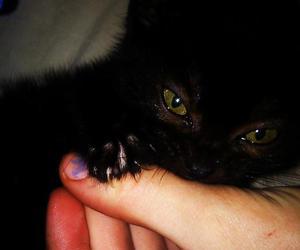bite, black, and cat image