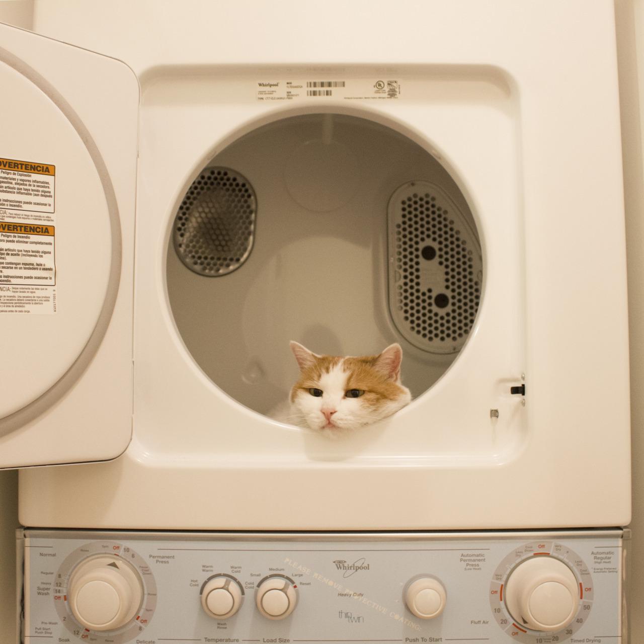 animal, cat, and boredom image