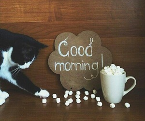cat, good morning, and coffee image
