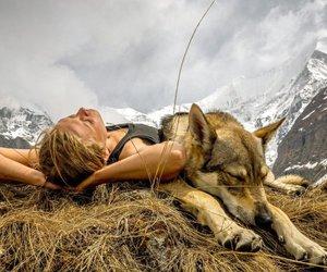 dog, freedom, and travel image