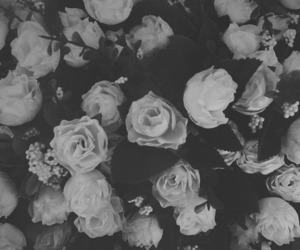 background, black, and roses image