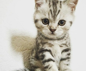 small cats image
