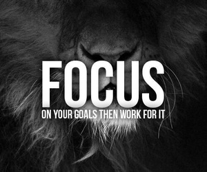focus and lion image