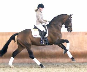 dressage, girl, and horse image
