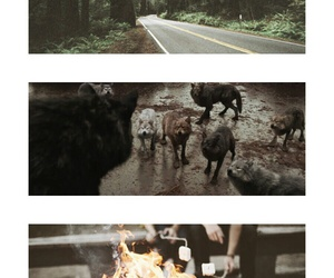 pack, twilight, and werewolf image