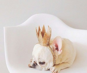 crown, puppy, and gold image