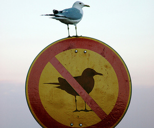 bird, funny, and sign image