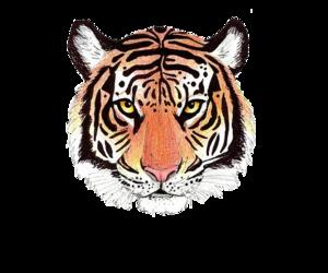 tiger, overlay, and animal image