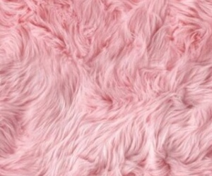 fur, pink, and cute image