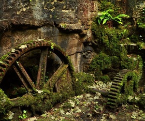 abandoned, forest, and moss image