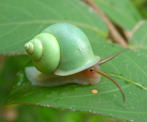 snail, animal, and green image