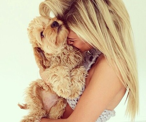 cute, dog, and love image