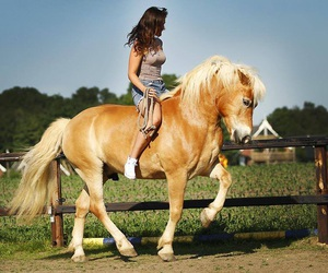 equestrian, horses, and passion image