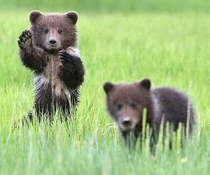 animals, bears, and puppy image