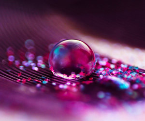 art, plum, and water image