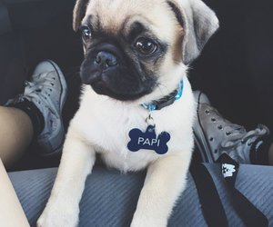 animal, dog, and cutie image