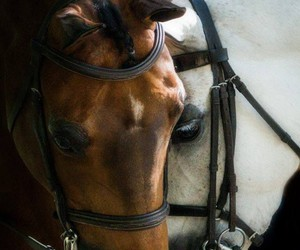 horse, animal, and friends image