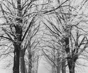 black and white, tree, and photo image