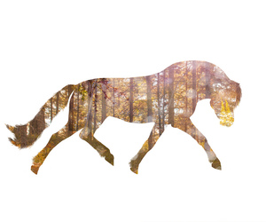 autumn and horse image
