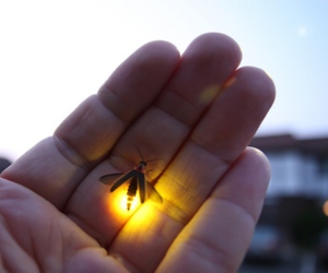 light, firefly, and photography image