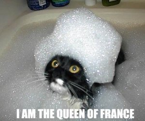 cat, funny, and Queen image