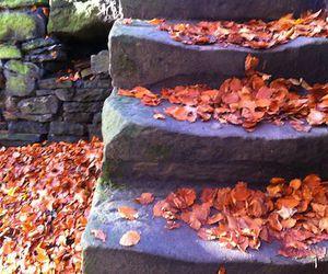 autumn, bridge, and canal image