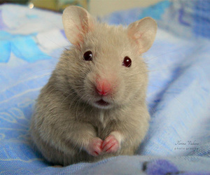 baby, hamster, and pets image
