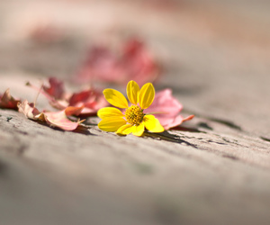 beautiful, flower, and tender image