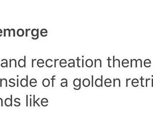 golden retriever, parks and recreation, and parks and rec image