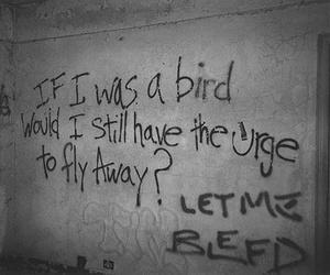 bird, fly away, and grunge image