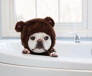animal, aww, and bathroom image