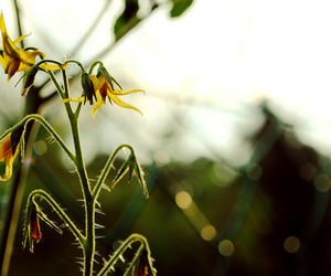 flowers, photography, and sunlight image
