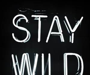 wild, background, and stay image