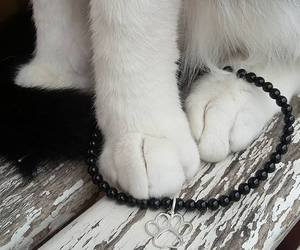 cat, gatto, and paw image
