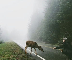 nature and grunge image