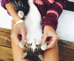 animal, pet, and aww image