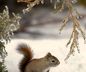 animal, squirrel, and winter image