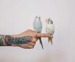 Image by Robin Kay