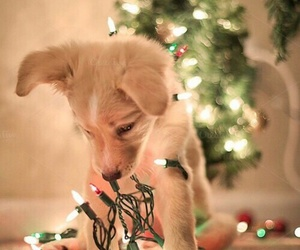 Christmas time, cute, and funny image