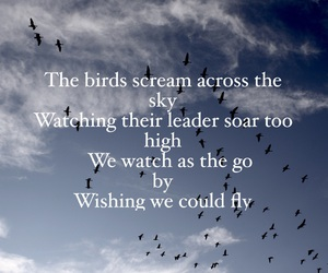 birds, quote, and quotes image
