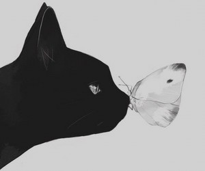 cat, butterfly, and black image