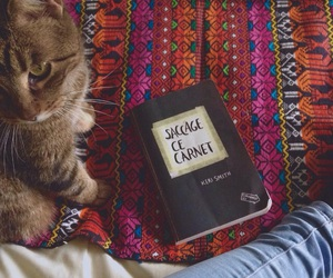 book, cat, and chat image