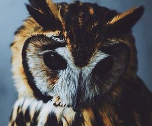 owl and photo image