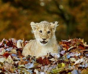 Animais and animal image