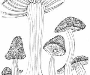 doodle, flora, and illustration image