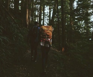 forest, adventure, and tree image