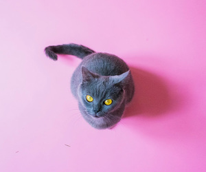 cat, pink, and animals image