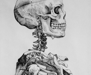 bones and human image